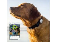 Dog Activity Monitor