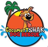 Dominican Republic Dog Rescue looking for donations