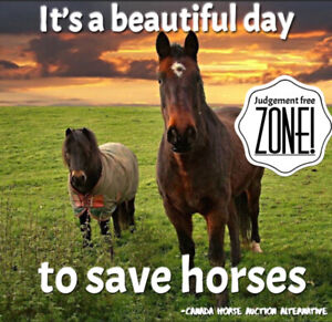 Taking your horse to auction? Try here first!