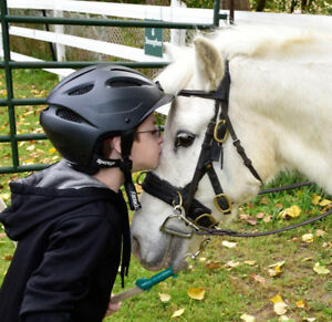 LF Therapeutic Riding Horse