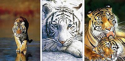 Large Poster Set - Set of 3 Original Large 35x23 inch Tiger Endangered Animal Poster Prints