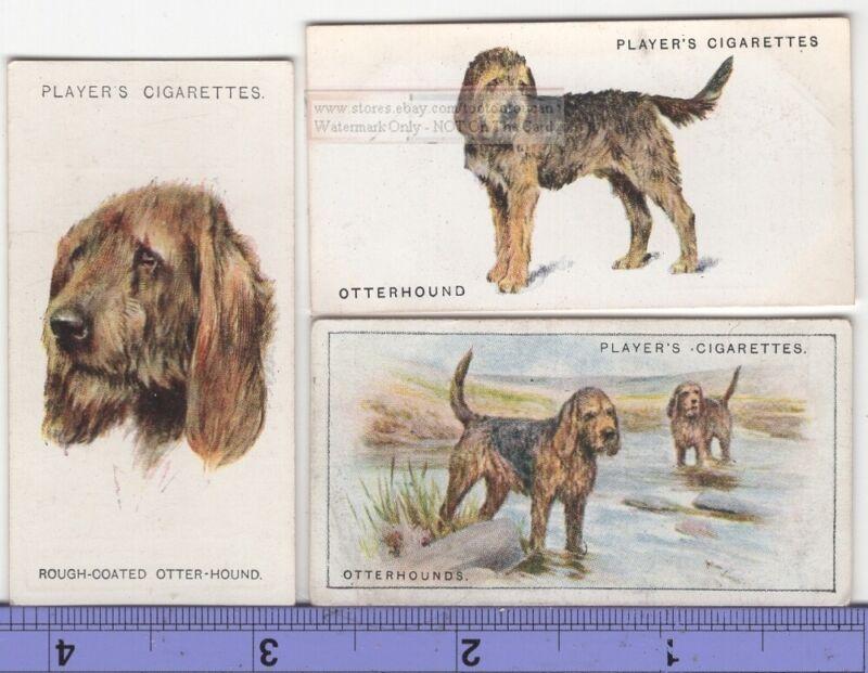 Otterhound Dog 3 Different Vintage Ad Trade Cards #3 Canine Pet