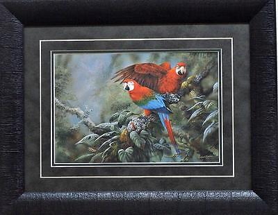 Gamini Ratnavira Green-Winged Macaw Parrot Print-Framed 19 x - Green Macaws Framed