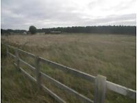 Grazing land with shelter holt norfolk