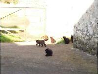 Kittens needing new home. 4 black 1 brindle