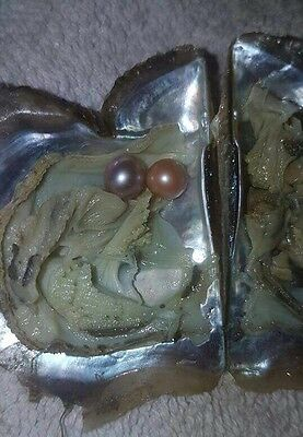 Oyster With Akoya Pearl Inside Contains 95% TWINS 2 Pearls Mother's Day Gift