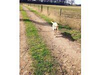Kate's Pet Care Services - Dog Walking, Pet Sitting