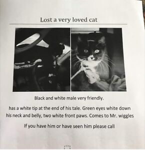Very loved cat lost