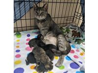Kittens!!!!