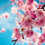 Apple_Blossom_Park