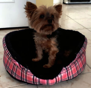 Bed for small dog/Lit pour petit chien