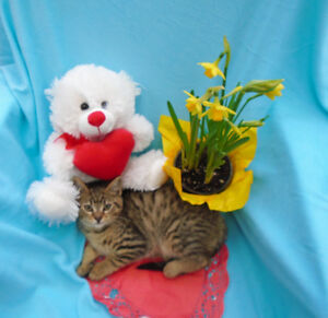 Adorable Tabby Kittens ~ great companions!
