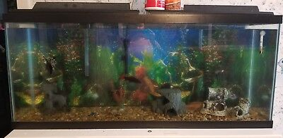 55 gallon fish tank, and 15 gallon fish tank with stand