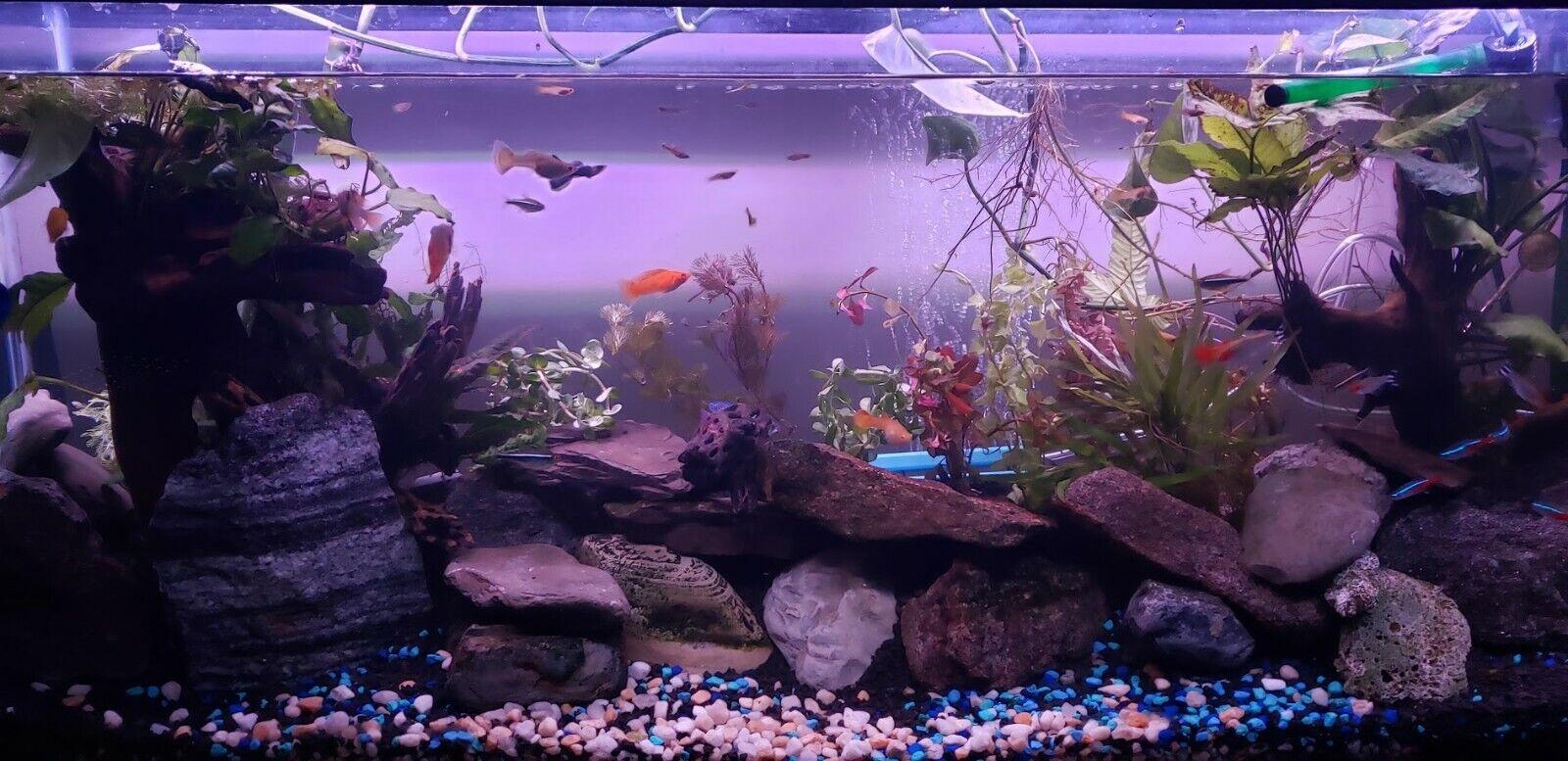 10 DIFFERENT SPECIES 50+ stems FULL 30g planted tank easy beginner aquarium 2
