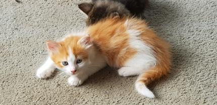 Beautiful and playful kittens