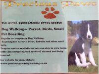 Dog Walking Pet Care