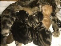 Beautiful kittens ALL NOW RESERVED