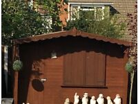 Garden Shed - 10ft x 6ft