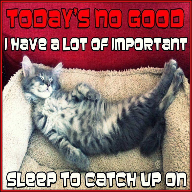 Funny Cat Humor Today