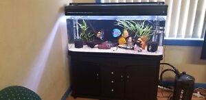 fish tank sale includes fish