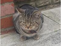 Missing Cat Male Tabby from Staithes ave Benton Rescue cat
