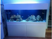 600L CUSTOM MADE FISH TANK AQUARIUM 2M LONG SOLID WOODEN STAND LIGHT SUMP VERY HEAVY DELIVERY AVA