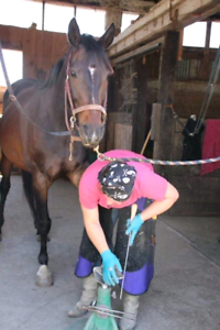 Holistic farrier now accepting new clients!