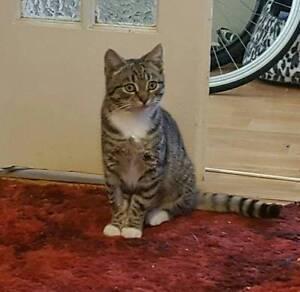 Female Kitten Rescued - Cat Rescue Newcastle Hamilton Newcastle Area Preview
