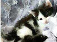 5 beautiful kittens ready now!