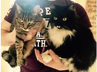 Two Beautiful Indoor Cats