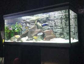 Full Tropical or Cold water fish tank / aquarium with External Filter, lights, Heater