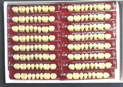 Dentsply New Hue Dentist Dental Lab Porcelain Denture Teeth  31m  L 73b4