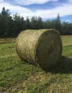 Bales for Sale or Trade