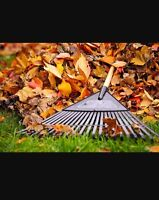 Leaf Raking and Trough Cleaning