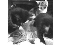 1 left now - A litter of kittens - I can bring them to you