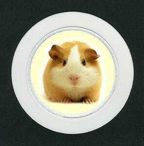 Guinea-Pig-Re-Usable-Tax-Disc-Holder