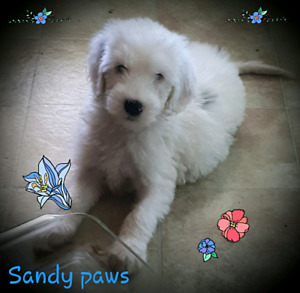 All Puppies | Adopt or Rehome Pets in Saint John | Kijiji Classifieds