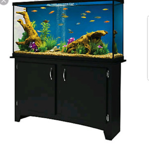 Looking for fish tank