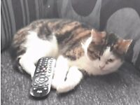 Female neutered cat, 2 years old *needs a pet free home*