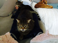 CAT NEEDS RE-HOMED URGENTLY DUE TO ALLERGY. CAN GO TOGETHER OR SEPARATELY