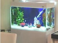 Aquael Glossy White 80 Aquarium and Cabinet set