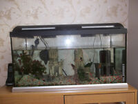 TROPICAL FISH TANK AND ACCESORIES.