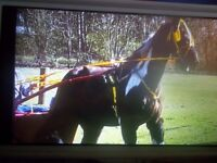 horse pacing stallion £600 or offers