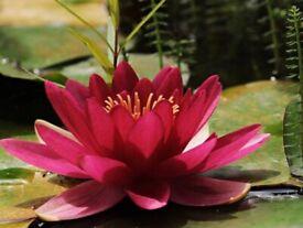 Tawan Thai Massage - 07934124398
