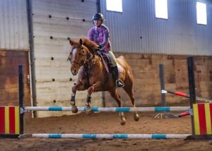 Jumping Clinic, March 2/3