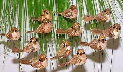 12´er Set trendy Natur Vogelstecker 20 cm top zum verarbeiten Preishit 5430