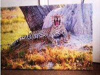 LTD EDITION TRULY LOVELY CANVAS PRINT OF LEOPARD THAT IS SO VIBRANT AND NICE