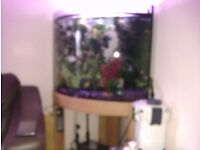 Tropical setup inc fish, 200 ltr Corner tank