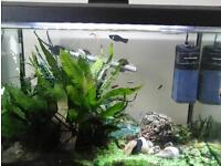 fully equiped fish tank including fish and accessories