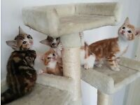 4 kittens ready for new homes